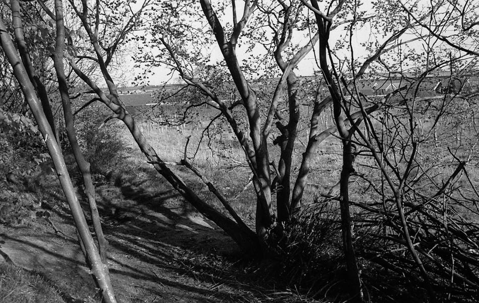 http://jamesesmith.info/files/gimgs/74_treesbank-3.jpg